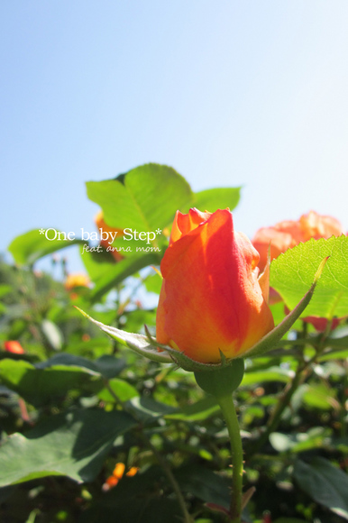 Canon IXY 200F EF-S 18-55mm F3.5-5.6 IS [5mm F8 1/125 ISO160 ±0EV]